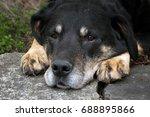dog outside | Shutterstock . vector #688895866