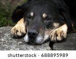 dog outside | Shutterstock . vector #688895989