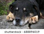 dog outside   Shutterstock . vector #688896019