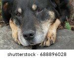 dog outside   Shutterstock . vector #688896028