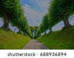 lime tree avenue  nature | Shutterstock . vector #688936894