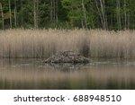 Beaver lodge at Pleasant Valley Wildlife Sanctuary, Berkshire Mountains, Massachusetts