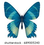 beautiful butterfly isolated on ...