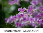 beautiful orchids from south... | Shutterstock . vector #689015014