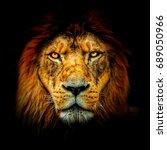 Close Up Of Lion Portrait....