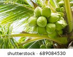 close up coconut fruit on tree. ... | Shutterstock . vector #689084530