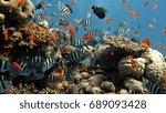 natural beautiful fish scenery  | Shutterstock . vector #689093428