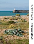 Shingle Shore And Plants At...