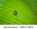 insect | Shutterstock . vector #689117893