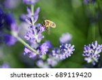 bee gathering nectar from... | Shutterstock . vector #689119420