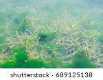 Small photo of alge, alge sub apa