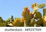Sabres  Fruits Of Opuntia Ficu...