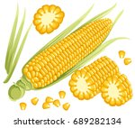 yellow corn on the cobs  male... | Shutterstock .eps vector #689282134