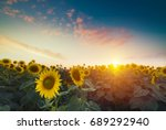 sunflowers  japan. field of...   Shutterstock . vector #689292940