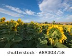 Scenic View Of A Field Of...