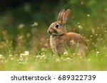 Adorable Wild Rabbit On Meadow