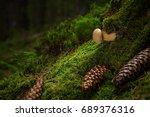 tylopilus felleus. inedible... | Shutterstock . vector #689376316
