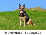 a beautiful german shepherd dog ... | Shutterstock . vector #689383636