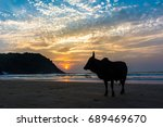 silhouette of one cow with...