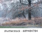 a dry tree covered with snow... | Shutterstock . vector #689484784