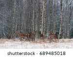a herd of deer of different... | Shutterstock . vector #689485018