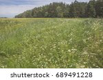 meadow with field flowers with... | Shutterstock . vector #689491228