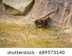 baby baboon drinking water | Shutterstock . vector #689573140