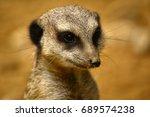 Close Up Of A Meerkat Head