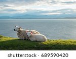 ewe and lamb relaxing with the... | Shutterstock . vector #689590420