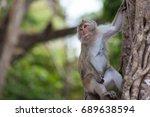 monkey on tree on backgound... | Shutterstock . vector #689638594