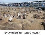 sheep sale yards | Shutterstock . vector #689770264