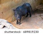 cute black pig | Shutterstock . vector #689819230