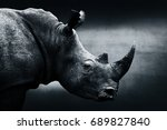 Highly Alerted Rhinoceros ...