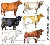milking breed set. dairy cow.... | Shutterstock . vector #689832514