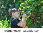 little boy picking blackberries ... | Shutterstock . vector #689832769