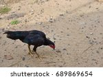 chicken on the ground | Shutterstock . vector #689869654