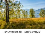 grassy glade in forest on... | Shutterstock . vector #689889829