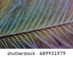close up of a feather. colour... | Shutterstock . vector #689931979