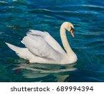 White Swan Swimming On Lake...