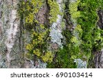 Natural Gray Old Tree Bark Wit...