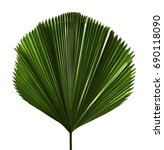 licuala grandis or ruffled fan... | Shutterstock . vector #690118090