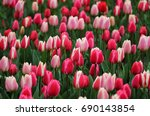 big amount of the colorful... | Shutterstock . vector #690143854