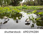 Ibis In Pond With Tourists At...
