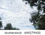 birds flying on the sky... | Shutterstock . vector #690279430