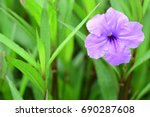 Wild Petunias  Science  ...