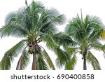 coconut tree on white... | Shutterstock . vector #690400858