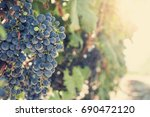 vineyards at sunset in autumn... | Shutterstock . vector #690472120