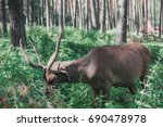 Small photo of Mountain deer in the forest among the grass. Altaic deer maral