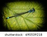Dragonfly  Odonata  On Green...