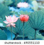 lotus flower | Shutterstock . vector #690551110